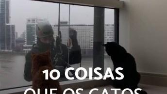 10 Coisas Que Gatos Adoram, A Primeira Não É Novidade Nenhuma Hahaha!