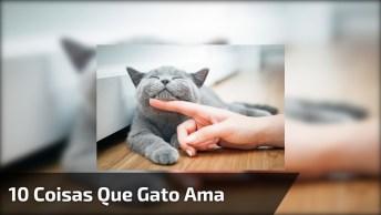 10 Coisas Que Os Gatos Amam, Dormir Tenho Certeza Que Você Já Sabia!