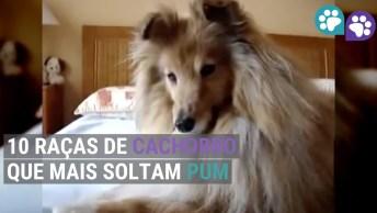 10 Raças Caninas Que Mais Soltam Pum, Olha Só Que Galerinha!