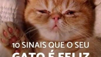 10 Sinais Que Seu Gato Está Feliz Vivendo Com Você, Agora Saberá Se Ele Te Ama!