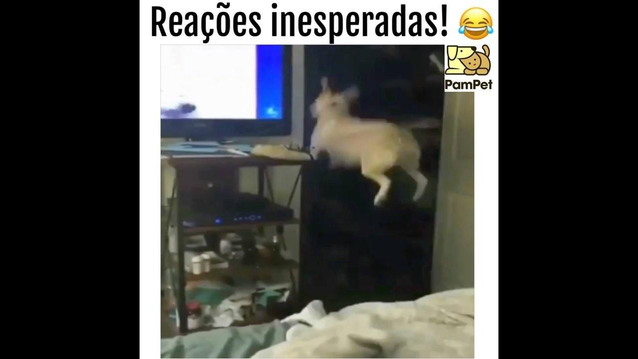 3 Cenas de cachorros tendo reações inesperadas
