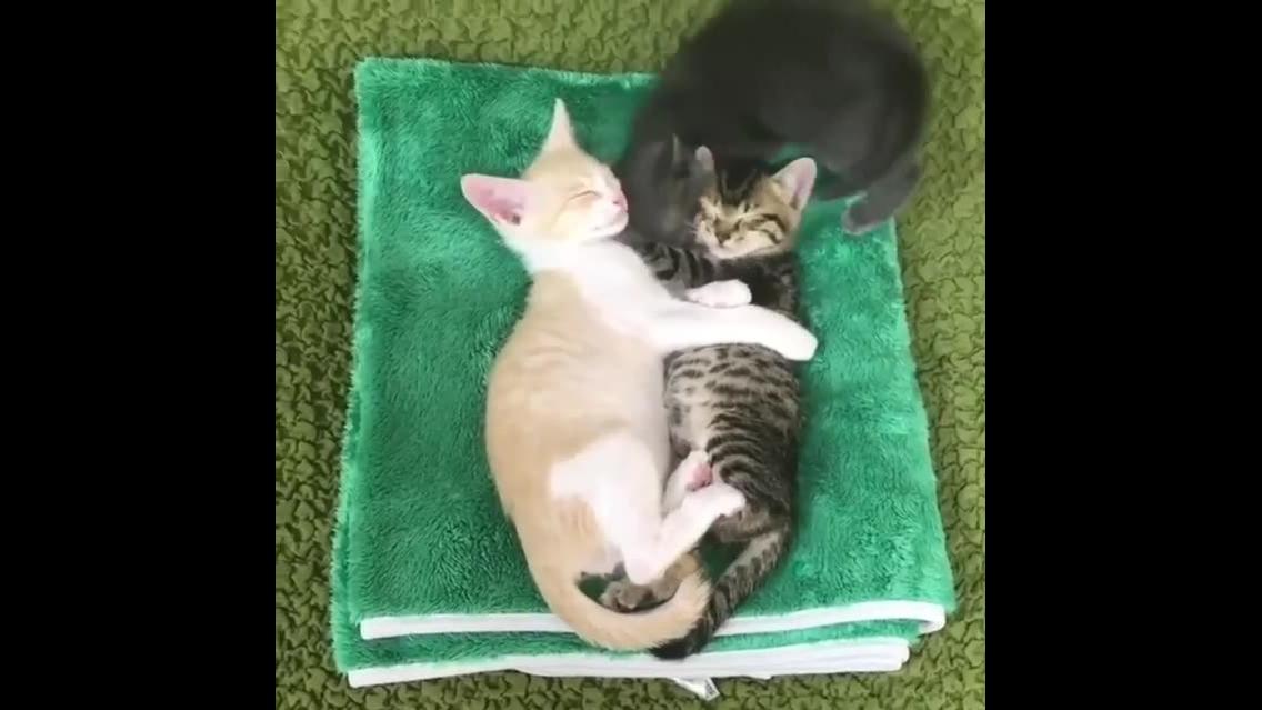3 filhotes de gatinhos tirando uma soneca