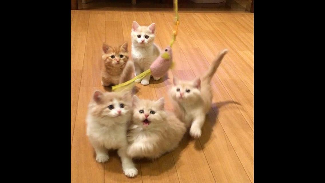 5 Gatinhos brincando