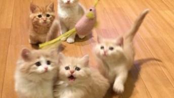 5 Gatinhos Brincando, Este Vídeo É Para Todos Que Ama Estes Seres!