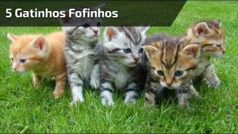 5 Gatinhos Fofinhos E Lindos, Difícil Escolher O Mais Lindo!