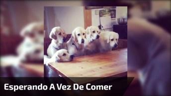 5 Irmãos De Cachorros Esperando A Vez De Comer Seus Bolinhos!