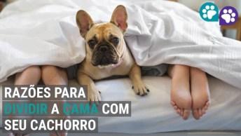 7 Motivos Para Deixar O Cachorro Dormir Na Cama, Para Quem Ama Cachorros!