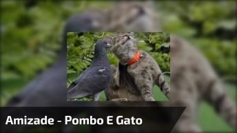 A Amizade Entre Um Pombo E Um Gato, Veja Como Eles Brincam!