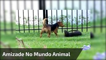 A Amizade No Mundo Animal É Incrível, Nem Grade Separa Eles!