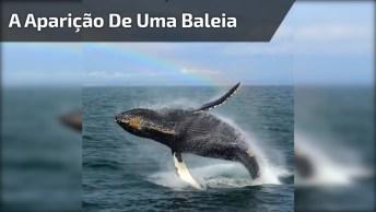 A Aparição De Uma Baleia Com Arco-Íris De Fundo, Ficou Perfeito!
