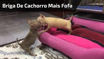 A Briga De Cachorro Mais Fofinha Que Você Vai Ver, Um Vídeo Adorável!