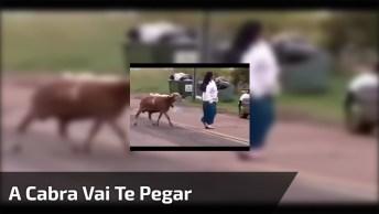 A Cabra Que Não Leva Desaforo Para Casa, Para Rir Muito E Compartilhar!