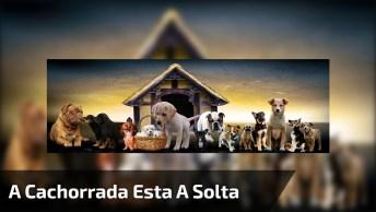 A Cachorrada Esta A Solta, Marque Uma Pessoa Que Se Pudesse Teria A Casa Assim!