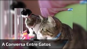 A Conversa Entre Gatos Mais Interessante Que Você Já Viu, Hahaha!