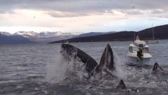 A Dança Das Baleias No Mar, Veja Que Linda Imagem E Compartilhe!