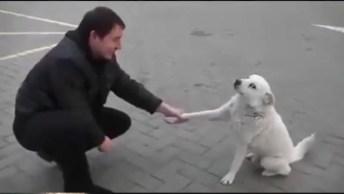 A Emoção De Ver Um Cachorro De Rua Recebendo Carinho, Que Lindo!