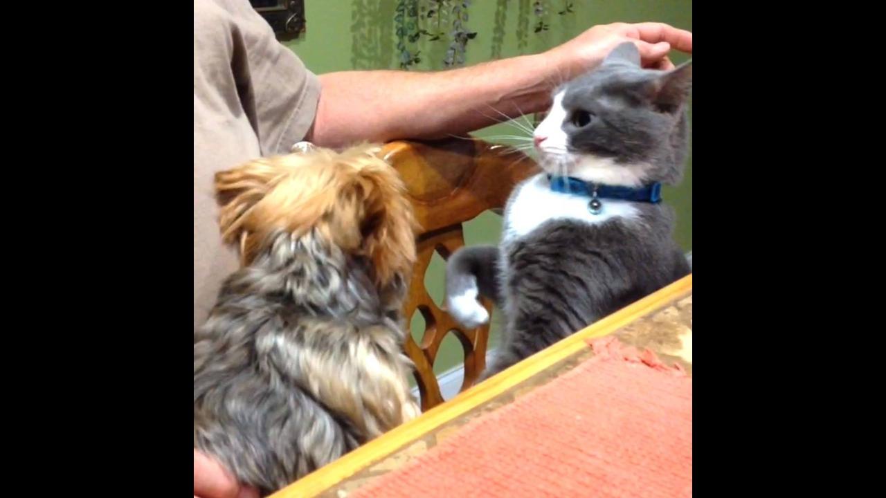 A eterna briga entre gatos e cachorros