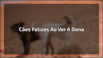 A Felicidade Desses Cães Ao Verem A Humana Chegar Foi Grande Que Teve Até Tombo!