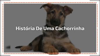 A História De Uma Cachorrinha Que Foi Abandonada Na Rua Com Frio E Fome!