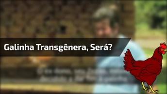 A História De Uma Galinha Transgênera, Será Que Isso É Possível?