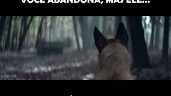 A Mensagem Mais Emocionante De Abandono De Cachorro, Ele Nunca Vai Te Abandonar!