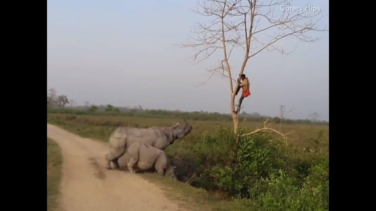 A revolta dos animais com os seres humanos