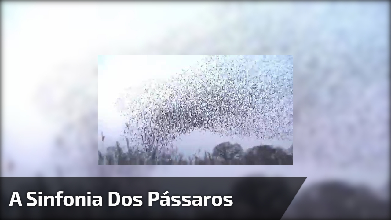 A sinfonia dos pássaros