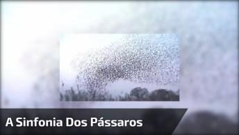 A Sinfonia Dos Pássaros, Como É Linda A Natureza, Confira!