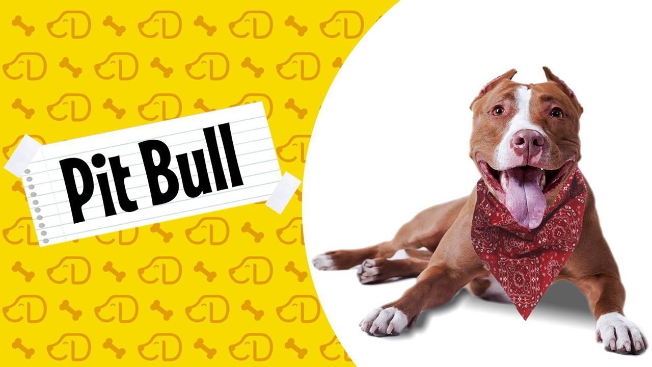 A verdadeira história dos Pit Bulls