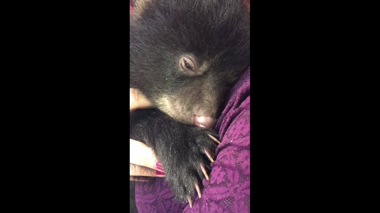 Abraçando um urso de verdade, já imaginou como seria