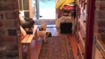Abrindo A Porta E Entrando Muitos Cachorrinhos, Confira!