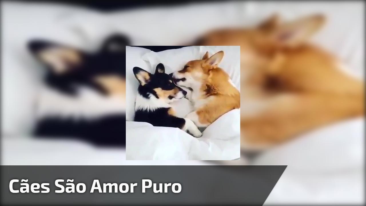 Cães são amor puro