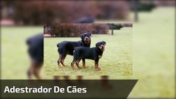Adestrador De Cães Mostrando Como Eles Aprendem Rápido, Confira!