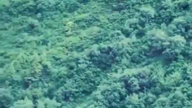 Águia Quase Perde Sua Presa Em Voo, Confira A Cena No Vídeo!