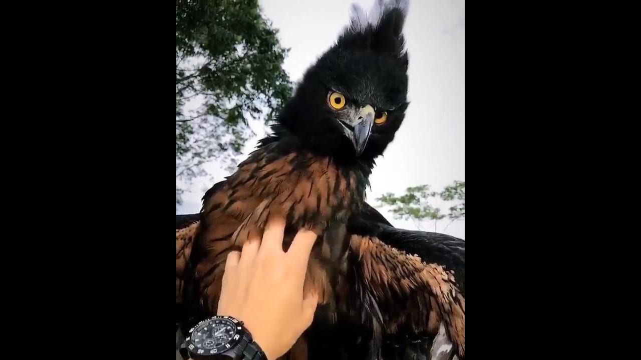 Águia, um dos animais mais lindos e misteriosos da natureza