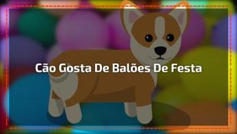 Alegria De Um Cachorro Com Balões De Festa Jogados Pela Sala!