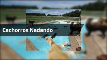 Alegria Desses Cachorros Nadando Em Uma Piscina, Que Fofura!