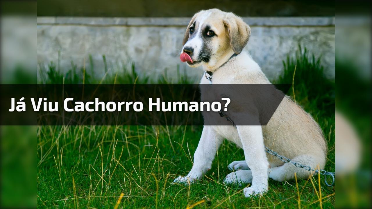 Alguém avisa este cachorro que ele não é humano, kkk! É muito fofo!!!