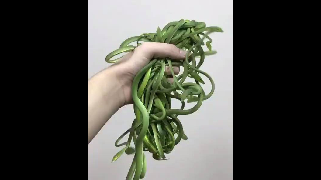 Alguém quer ver um bolo de cobras verdes ?