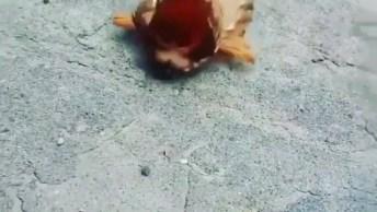 Alguém Sabe Que Animal É Esse? Onde Ele Vive? O Que Ele Come?