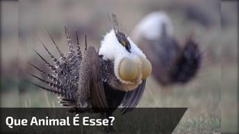 Alguém Sabe Que Animal É Esse? Uma Ave Muito Entranha, Confira!