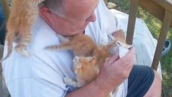 Alimentando Gatinhos, Veja O Desespero Dos Outros Querendo Mamadeira Também!