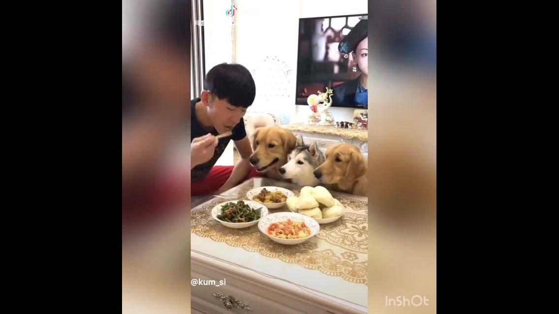 Almoço com os cães, olha só como essa galerinha é rápida