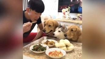 Almoço Com Os Cães, Olha Só Como Essa Galerinha É Rápida, Hahaha!