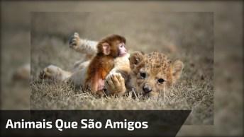 Amizade Entre Animais De Diferentes Especies, Eles Nos Surpreendem Sempre!