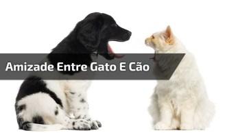 Amizade Entre Gato E Cachorro, Um Dos Vídeos Mais Fofos Do Dia!