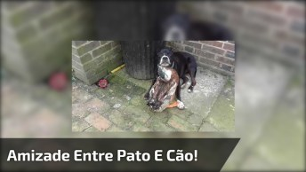 Amizade Entre Pato E Cachorro, É Impressionante O Amor Estre Os Dois!