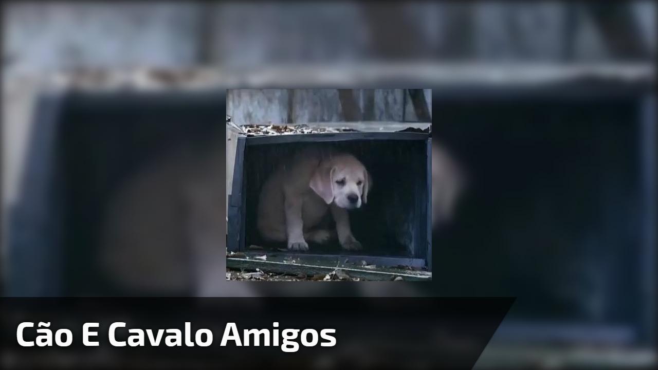 Amizade entre um cachorro e um cavalo, um lindo video de amizade verdadeira!