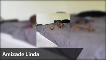Amizade Entre Um Pássaro E Um Cachorro, Que Linda Essa Cena!