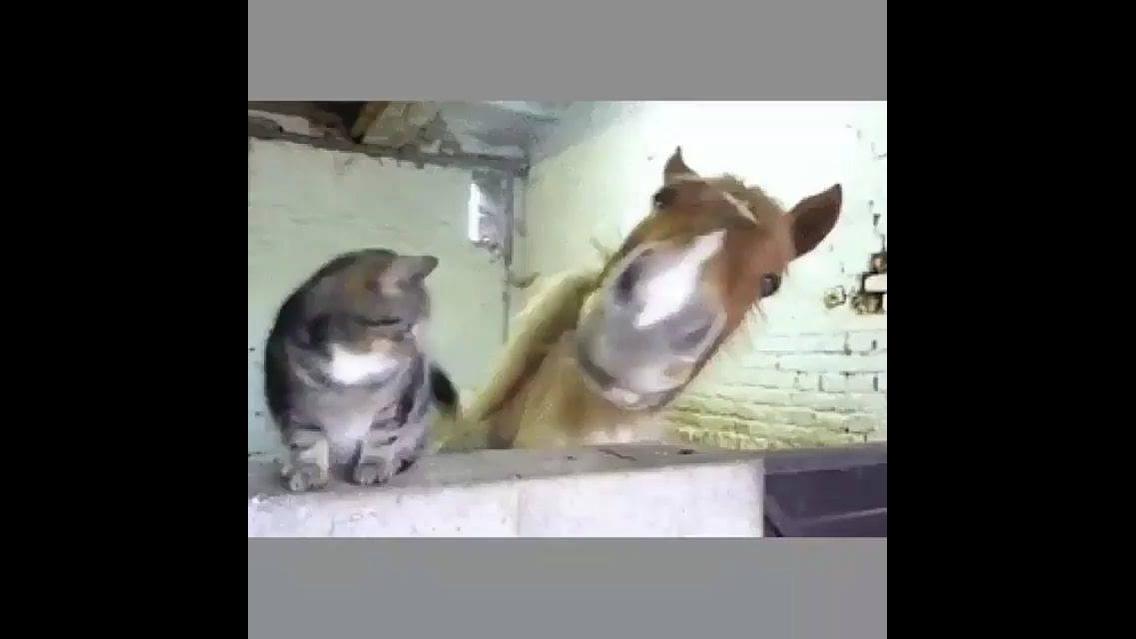 Amizade inusitada de um gato com um cavalo, que cena linda!